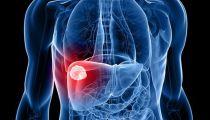 科普简单点:肝脏的5个主要功能