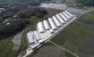 圣农集团:依托物联网技术打造智慧养殖